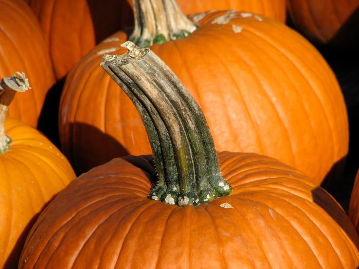 Pumpkin_stem